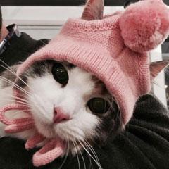 chaton sibérien Les Tsars de Foncourt